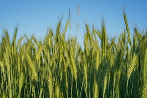 Looking for ORGANIC FARMLAND TO LEASE
