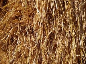 Organic Wheaten Hay 8 x 4 x 3 Bales