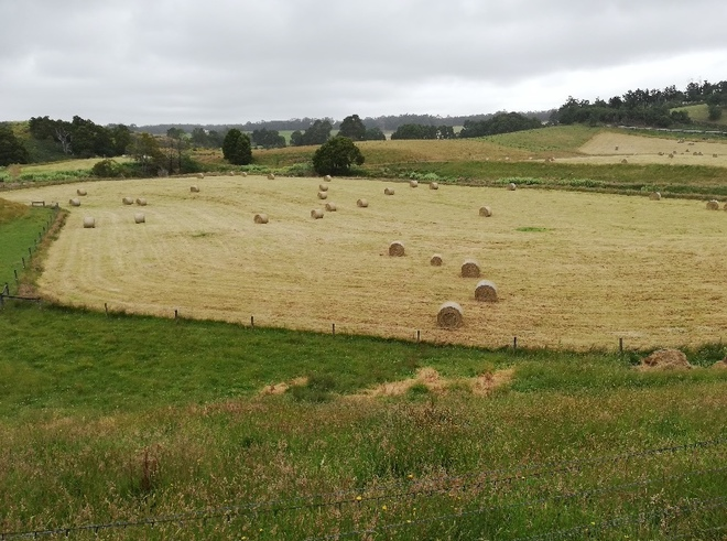 140 x Pasture Hay 5x4 Rolls
