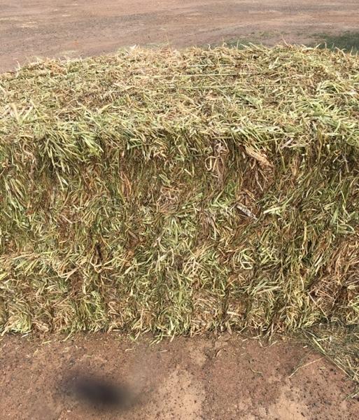 Clover Hay