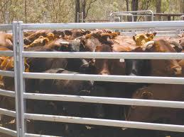 Cattle/Livestock Panels