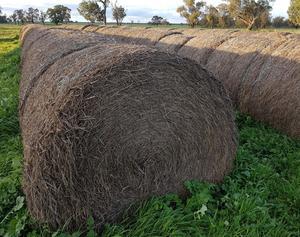 Wheaten Hay Rolls