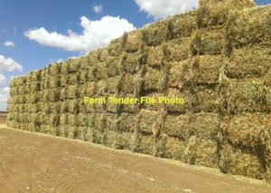 Oaten Hay 1/2 size large bales for sale.