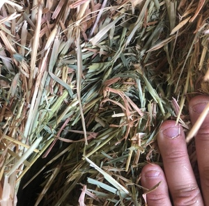 Oaten / Rye 100 Small square Bales - SOLD PER BALE