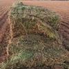 Lentil Hay