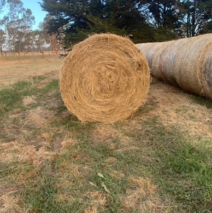 Pasture Hay For Sale