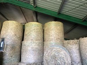 forage sorghum 4x4 round bales x 102