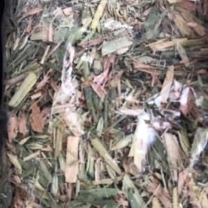 Barley-Vetch Hay for sale