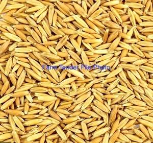 Yarran Oat Seed Bulk Only