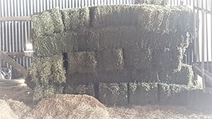 Moby Barley Hay