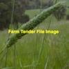 Certified Phalaris Tuberosa (Australian) Seed in 25kg Bags