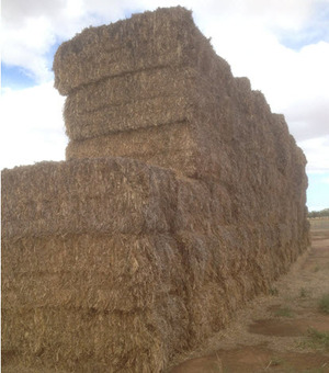 For Sale Old Weather damaged Hay Oaten Hay