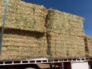 100mt Barley Hay 650-700kg 8x4x3 Bales