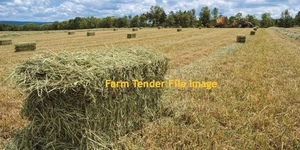 Oaten  Hay Compressed Small Squares     25 kg Bales