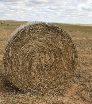 90 Barley & Rye Rolls