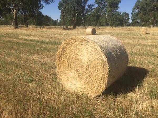 200 x Pasture Hay 4x4 Round Bales