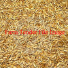 2-3 Tonnes of Triticale in Bulka Bags Germ Tested