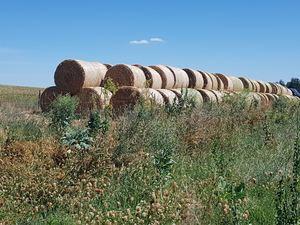 Prime Oaten Pasture Hay