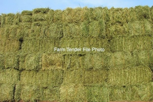 800 x Grass Hay Small Squares