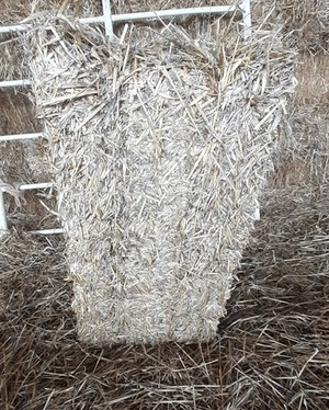 Under Auction - Barley Straw Small Square Bales - 2% + GST Buyers Premium On All Lots