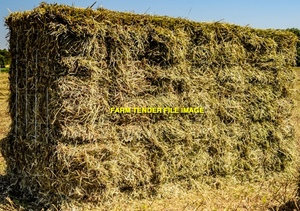 Pure Sub Clover Hay Small Square Bales (In Bale Baron packs)