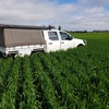 Quality 2019 Season Shedded Wheaten Hay (no rain damage)