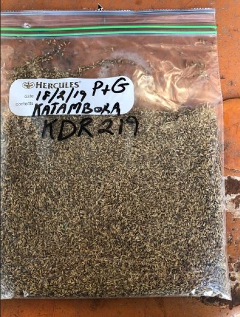 Rhodes Grass Seed  Katambora