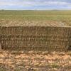 250mt Vetch Hay 600kg 8x4x3 Bales