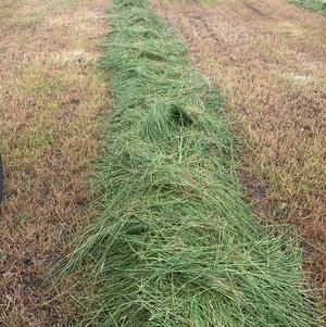 Grass Hay 8x4x3 Bales New Season