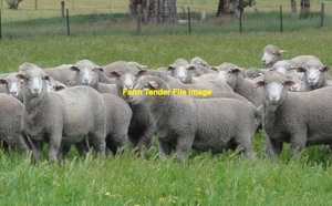 1,200 Acres Of Pasture ( Chemical Fallow ) For Sheep/Lambs