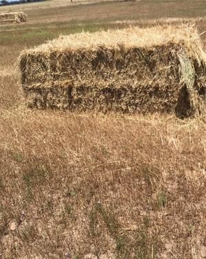 Organic Oaten Hay 200m/t approx 8x4x3 bales Ex Paddock