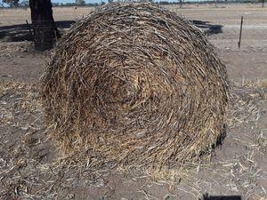 Wheaten Hay 5x4 Round Bales