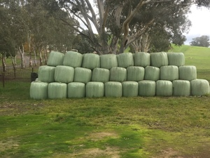 100 Rolls 4x4 Italian Ryegrass silage