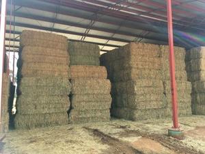 50mt Wheaten Hay