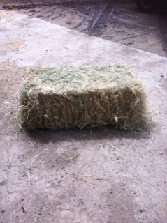 1000 x Grassy Lucerne Hay Small Squares