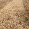 Straw stubble (Header trails or standing)