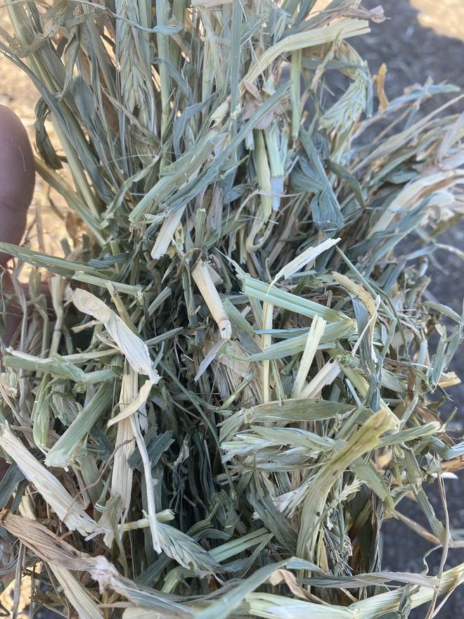 Wheaten/Barley Hay Good testing