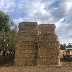 Barley Hay 8x4x3 Bales