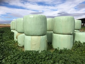 Under Auction - 30 Bales Canola Silage - 2% Buyers Premium on all Lots