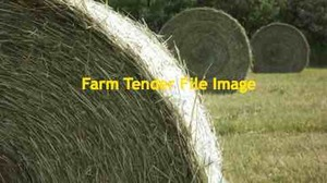 Triticale Hay 5x4 Round Bales