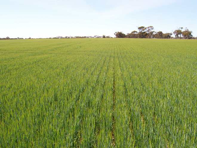 Wanted: Farmer/Owner Operator of Large Header from Western District Of Victoria to harvest cereals near Warracknabeal.