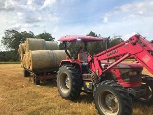 Freshly baled 4x4 round Rhodes Grass Hay