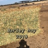 A1 Barley Hay 8x4x3 Bales