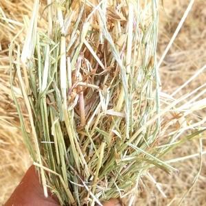 Ryegrass Hay 8x4x3 Bales