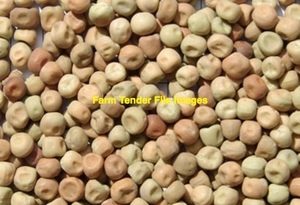 50mt Field Peas