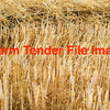 WANTED - BARLEY STRAW STANDING - NEW SEASON (2016)
