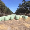 Clover Rye Silage Bales