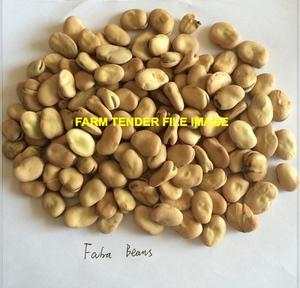 35 m/t of Samira Faba Beans