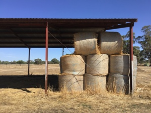 49 5x4 Round Bales of Irrigated Pasture Hay