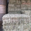 500 x Rye & Clover & Oaten Hay Small Square Bales Hay